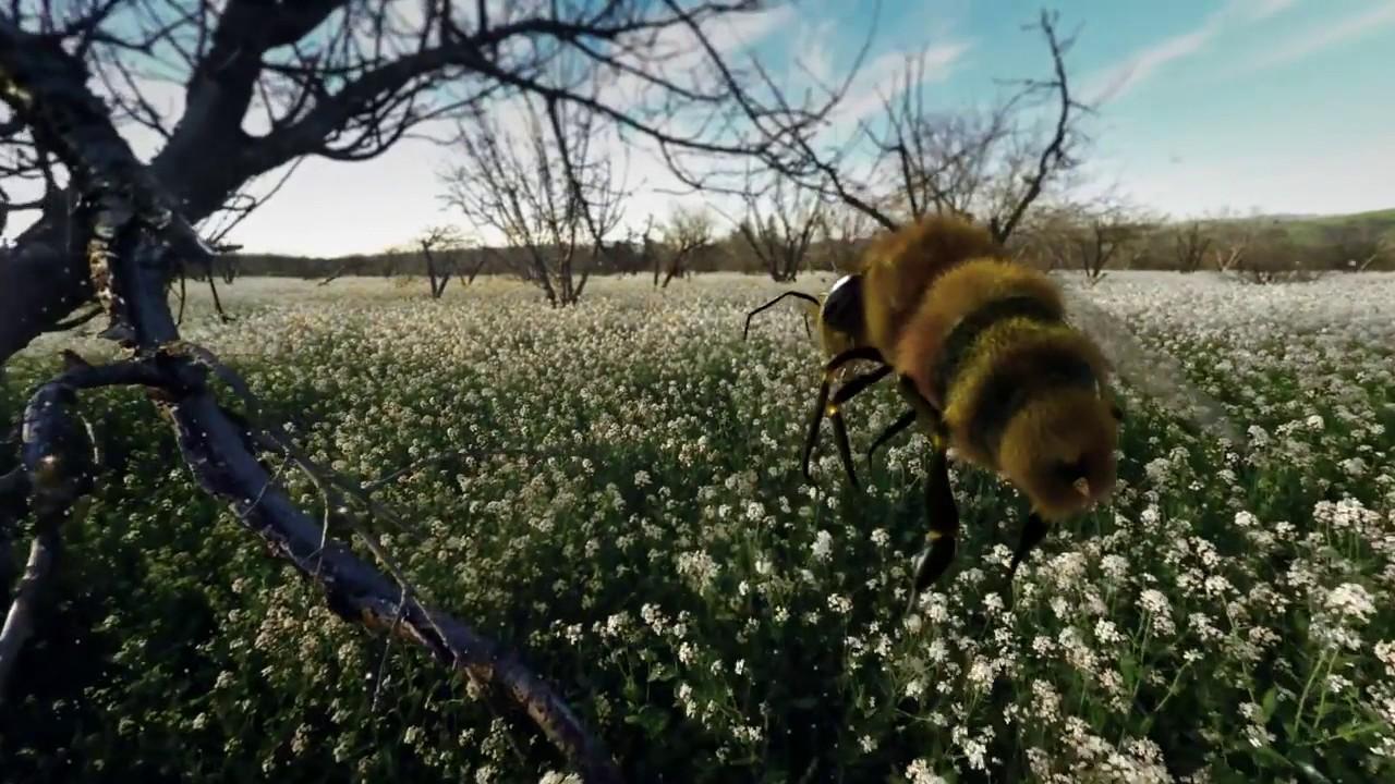 Haagen Daz Honeybee VR App